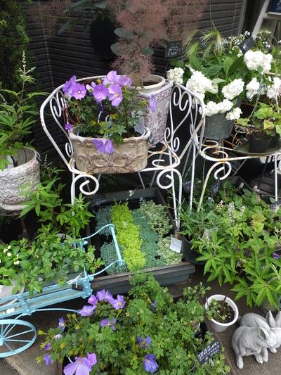オークリーフ(水色の紫陽花)_f0049672_1718811.jpg