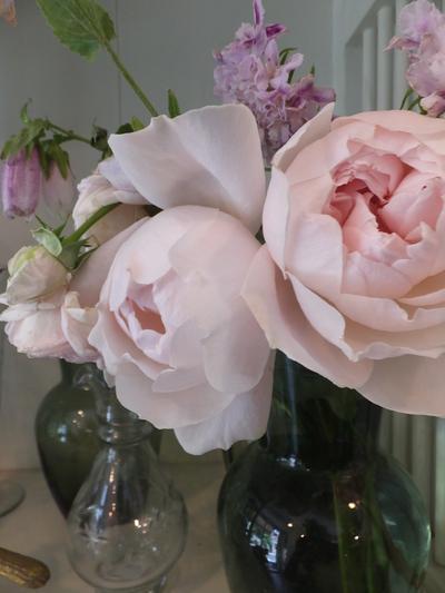 オークリーフ(水色の紫陽花)_f0049672_1734271.jpg