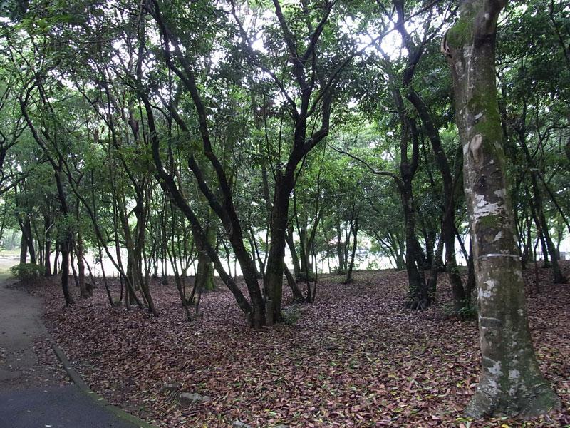 花菖蒲園.......市民の森_d0127182_1634675.jpg