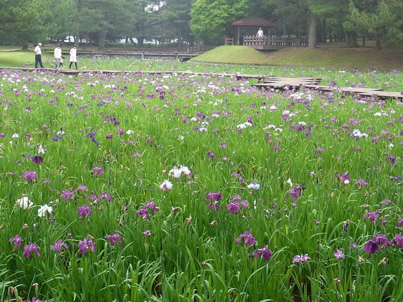 花菖蒲園.......市民の森_d0127182_1652962.jpg
