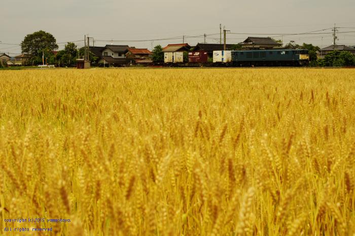 黄金色の麦畑へと_d0309612_23524542.jpg