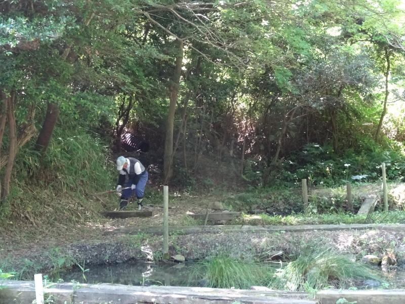 崖っぷちの草刈り継続 in うみべの森_c0108460_17431293.jpg