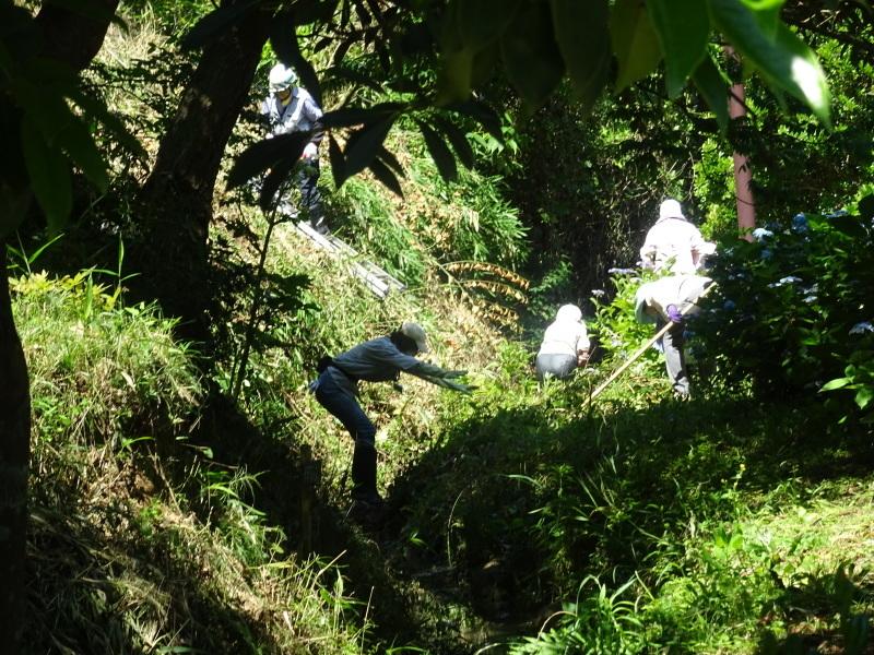 崖っぷちの草刈り継続 in うみべの森_c0108460_17431512.jpg