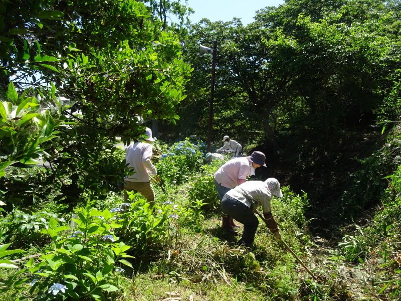 崖っぷちの草刈り継続 in うみべの森_c0108460_17432482.jpg