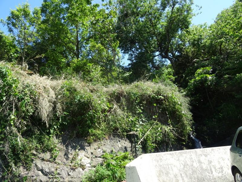 崖っぷちの草刈り継続 in うみべの森_c0108460_17525418.jpg