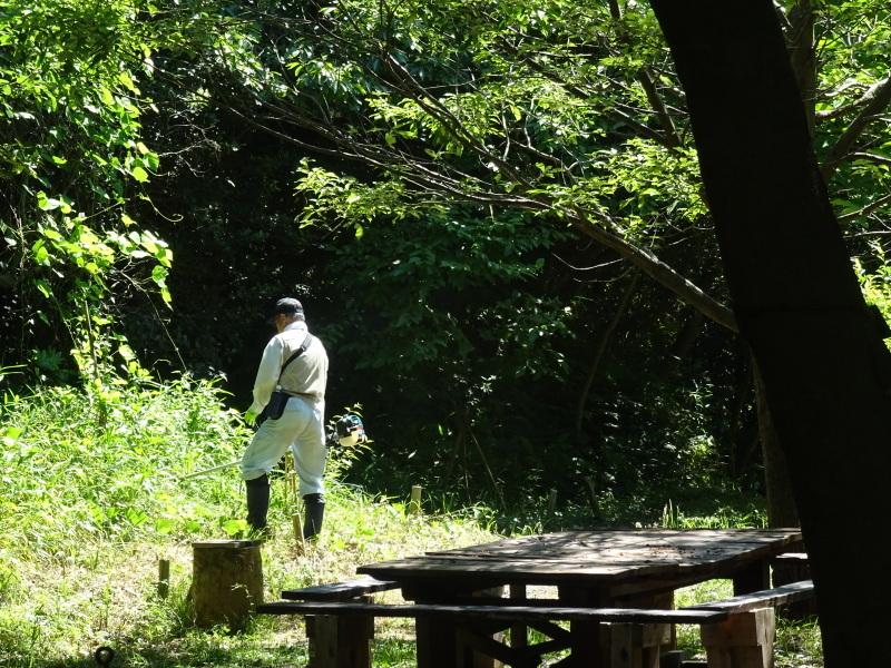 崖っぷちの草刈り継続 in うみべの森_c0108460_17552147.jpg