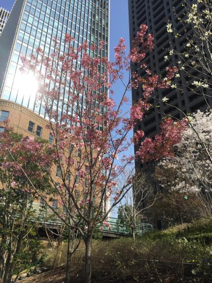 桜_f0134268_23492621.jpg