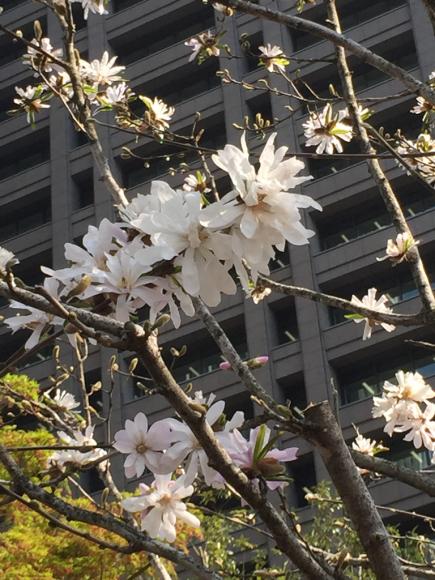 桜_f0134268_23492640.jpg