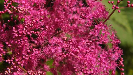 花の造形_b0214473_16513053.jpg