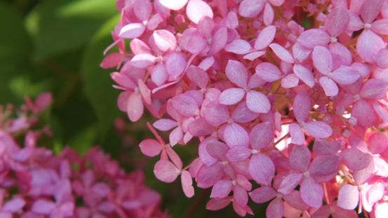 花の造形_b0214473_1651571.jpg
