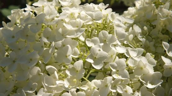 花の造形_b0214473_16521942.jpg