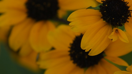 花の造形_b0214473_16523615.jpg