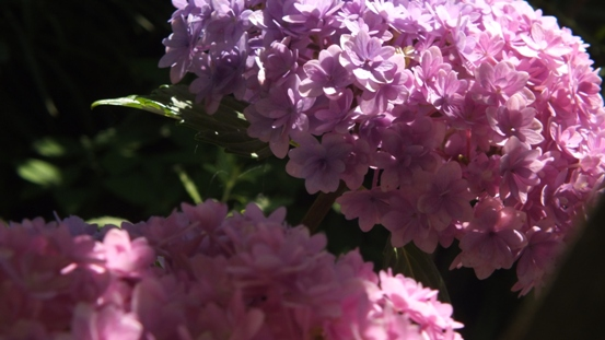 花の造形_b0214473_16525424.jpg