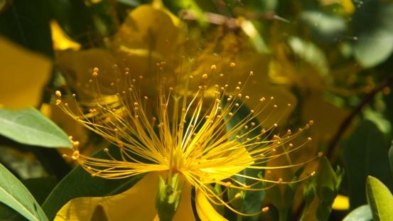 花の造形_b0214473_16535432.jpg
