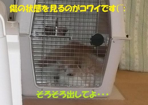 f0121712_7325885.jpg