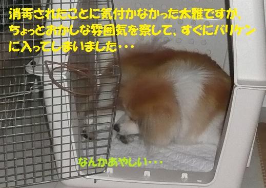 f0121712_7421895.jpg