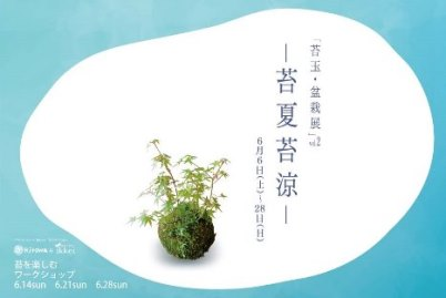 苔玉盆栽展はじまりますー_d0263815_14593128.jpg