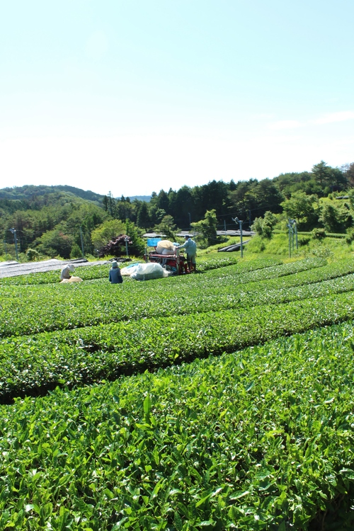 Sさんの畑!!!!_b0220318_0441245.jpg