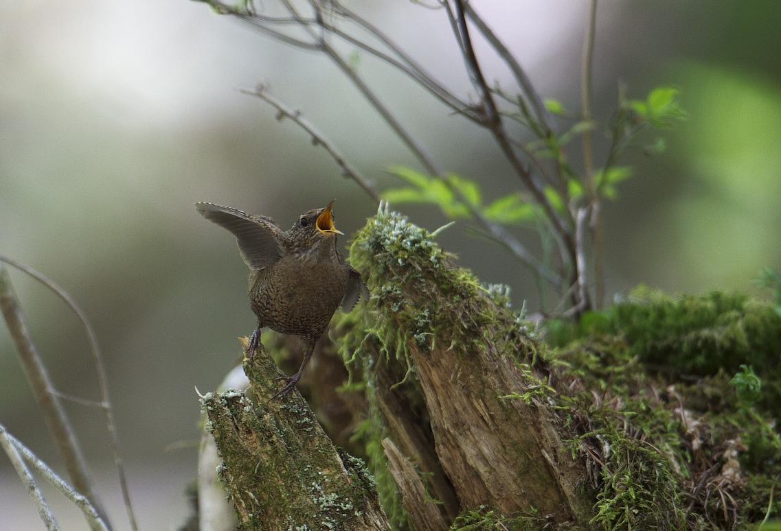 夏鳥遠征⑥_f0288418_23554550.jpg
