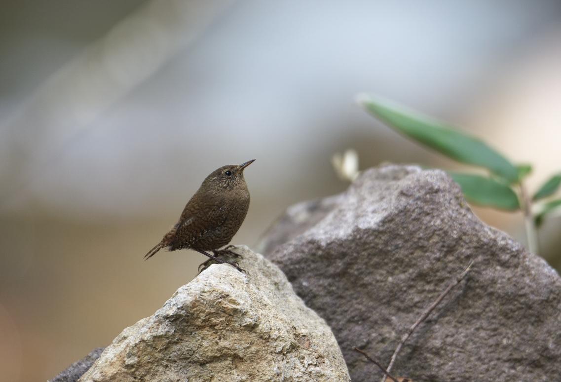 夏鳥遠征⑥_f0288418_23555518.jpg