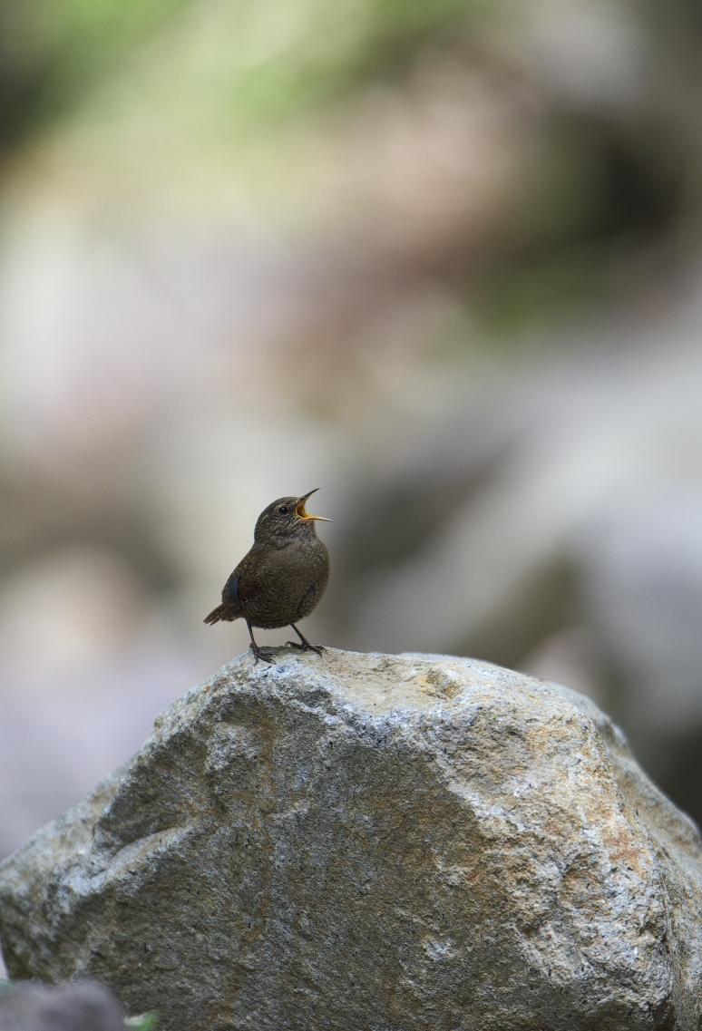 夏鳥遠征⑥_f0288418_23562952.jpg