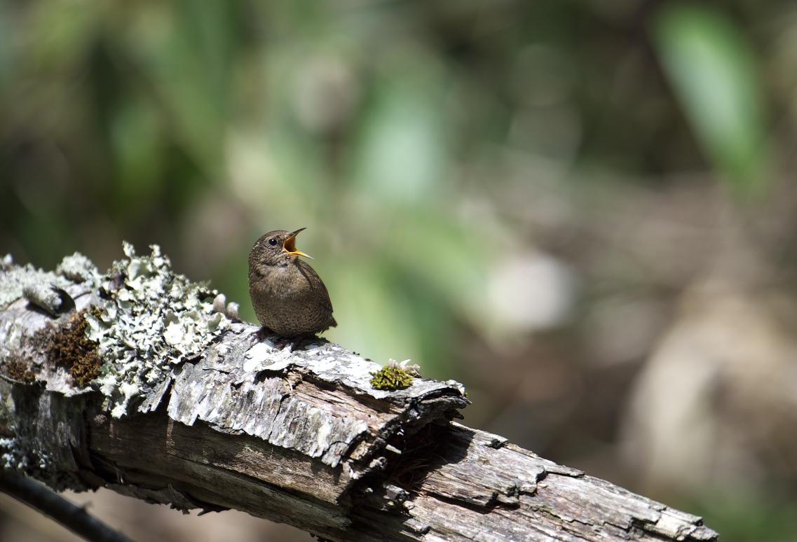夏鳥遠征⑥_f0288418_23564173.jpg