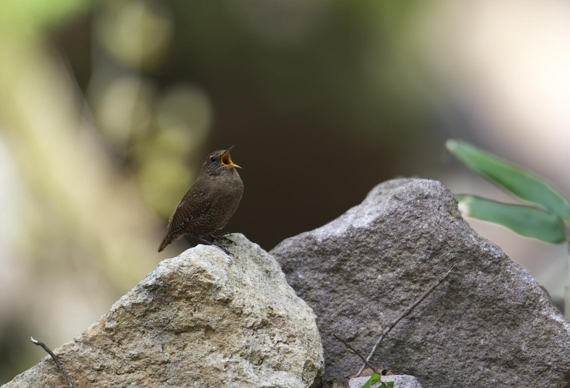 夏鳥遠征⑥_f0288418_2356676.jpg