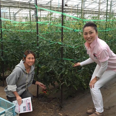 完熟ミニトマト~農業女子(女性)を応援~_b0199244_1259890.jpg