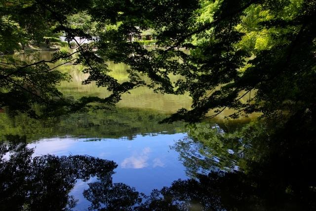 【薬師池公園】part 1_f0348831_23260812.jpg