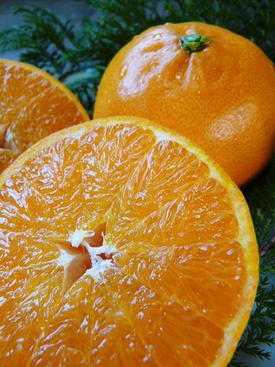 """究極の柑橘「せとか」 着果の様子(2020) 惜しまぬ手間ひまと匠の技で""""本物""""と呼べる美味しさに育てます_a0254656_17542496.jpg"""