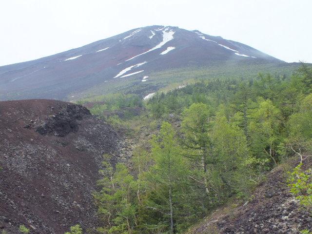 6月5日 富士山・御庭散策_e0145782_14563576.jpg