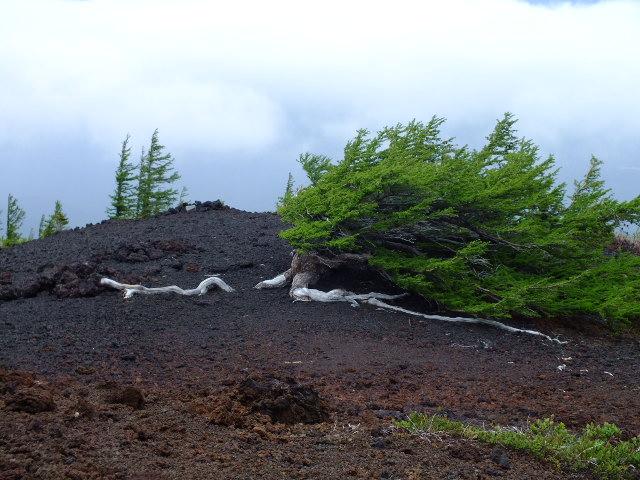 6月5日 富士山・御庭散策_e0145782_14581444.jpg