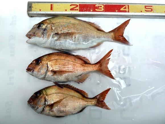 鯛釣り_f0150893_17173527.jpg