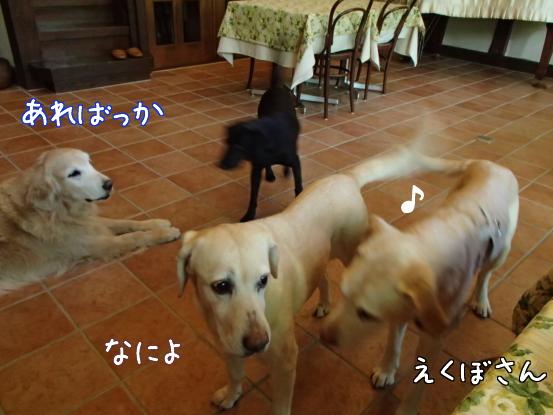 えくぼさんえくぼさ~ん_f0064906_1611547.jpg
