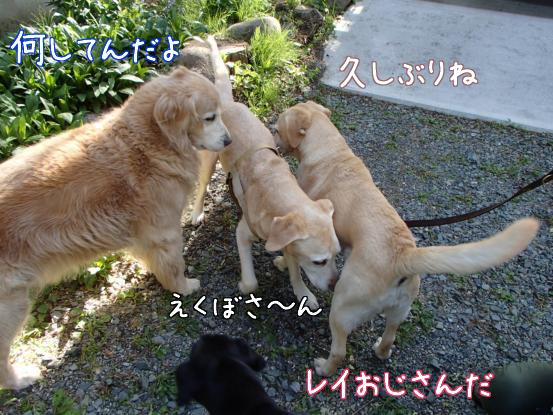 えくぼさんえくぼさ~ん_f0064906_1615518.jpg