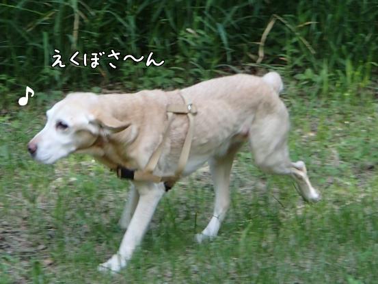 えくぼさんえくぼさ~ん_f0064906_1645439.jpg