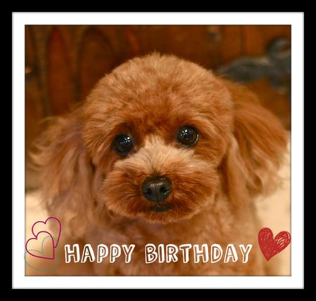 Happy Birthday♡ソルト_d0060413_18301167.jpg
