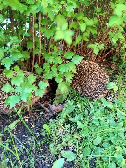 ウチの庭。_d0241813_06184061.jpg