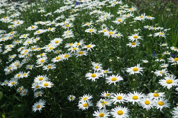趣味の園芸【Myファームの花達①】4~5月に咲いた主な花達です♪_b0033423_18321677.jpg
