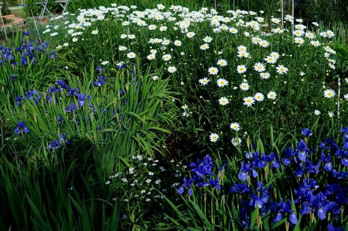 趣味の園芸【Myファームの花達①】4~5月に咲いた主な花達です♪_b0033423_1834511.jpg
