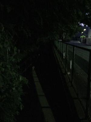 ホタル鑑賞ランニング ②  (64)_b0203925_1222529.jpg