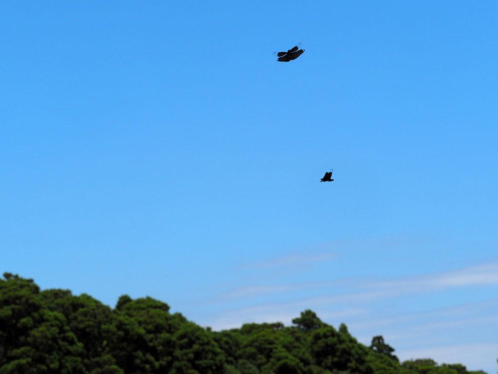 千葉のトンボ池訪問 ウェーダーデビューの日_f0324026_181656.jpg