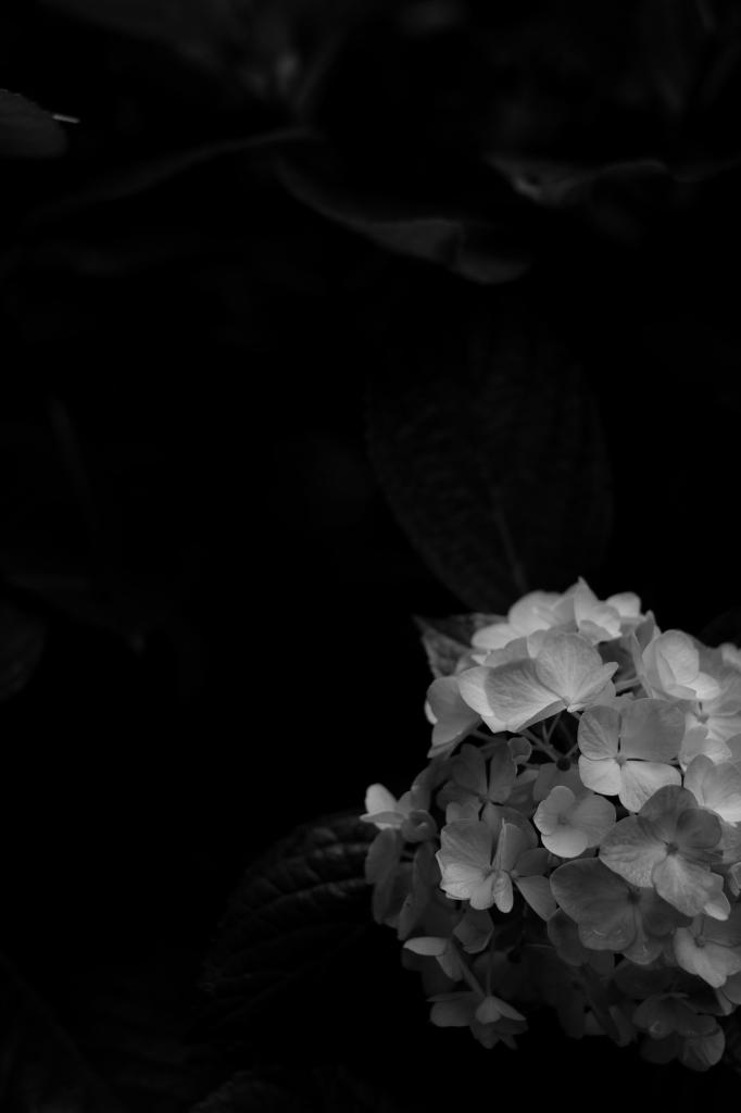 新宿御苑 標準レンズ+モノクローム ワークショップ _f0050534_23512609.jpg