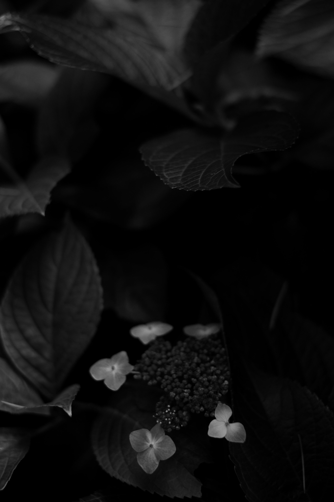 新宿御苑 標準レンズ+モノクローム ワークショップ _f0050534_23512620.jpg