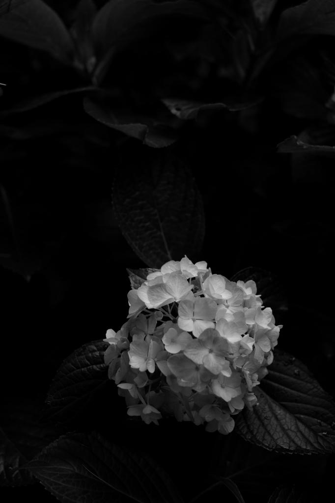 新宿御苑 標準レンズ+モノクローム ワークショップ _f0050534_23512630.jpg