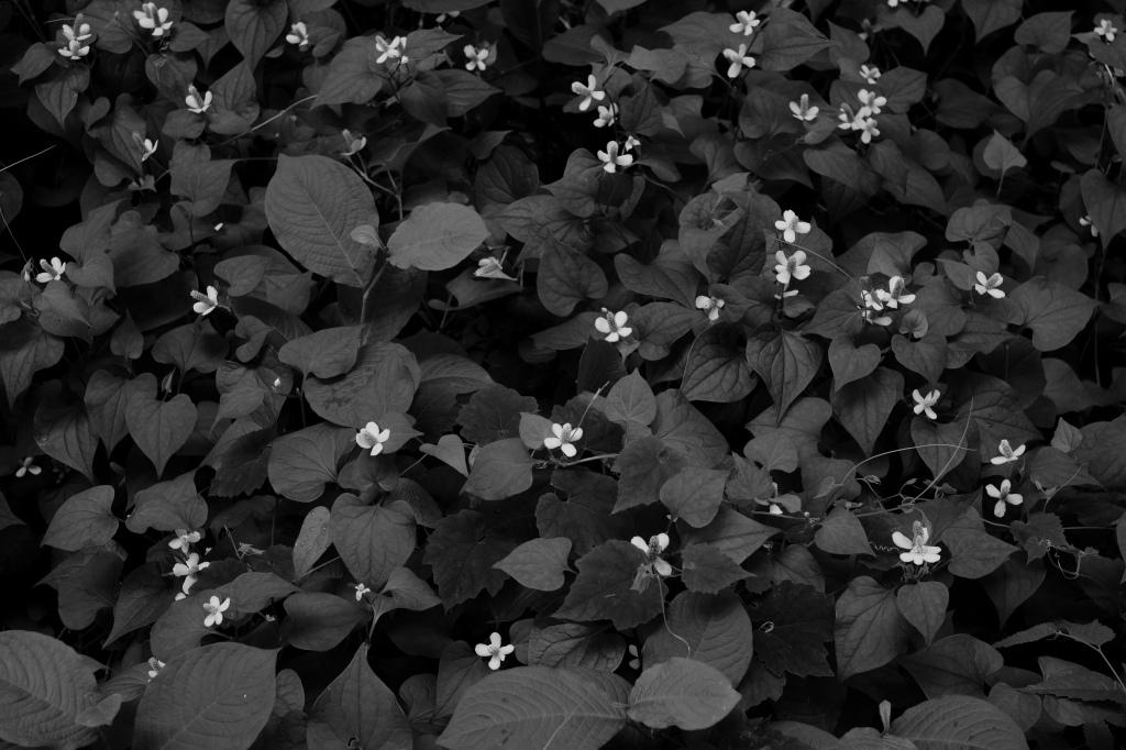 新宿御苑 標準レンズ+モノクローム ワークショップ _f0050534_23574291.jpg