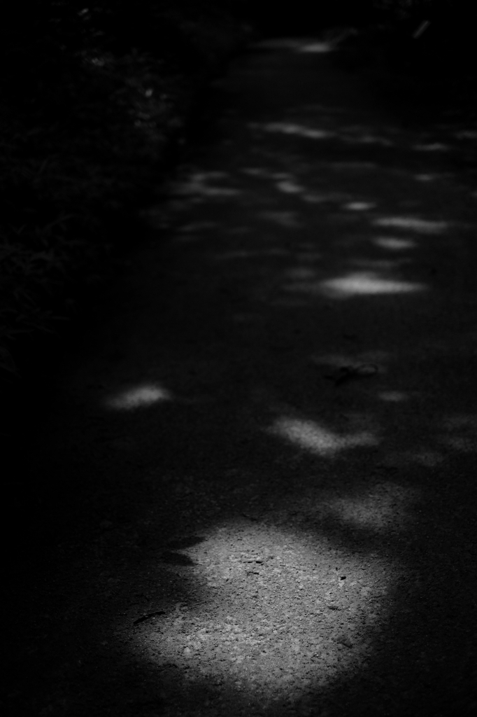 新宿御苑 標準レンズ+モノクローム ワークショップ _f0050534_23593446.jpg
