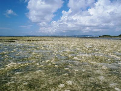 カーミージーの海の散策①_c0180460_22432087.jpg