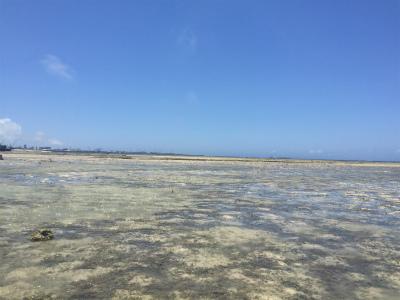 カーミージーの海の散策②_c0180460_23372221.jpg