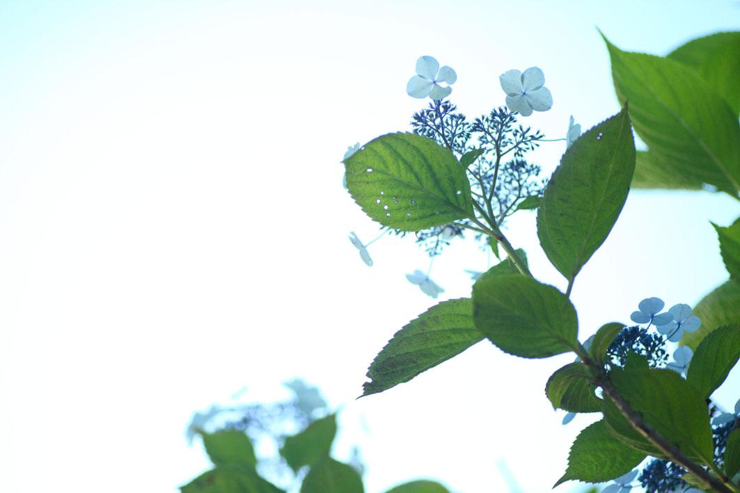 6月の花_c0299360_1648582.jpg